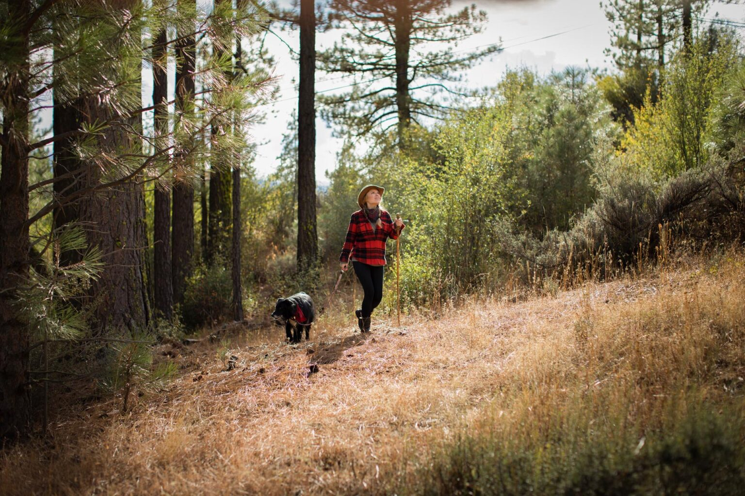 Walking Dog Tahoe